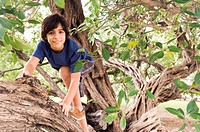 Mixed race boy climbing tree