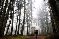 One way up sign, Olympic Peninsula, Washington, USA