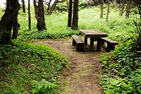 A picnic table at Seal Rock State Park, Newport, Oregon, USA
