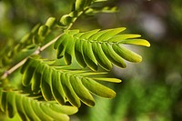 Close_up of fern leaves