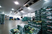 Salad crop distribution warehouse