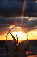 Person´s hands holding a sapling inside a crystal ball at sunset, Miami Beach, Florida, USA