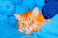 Red cat in blue threads