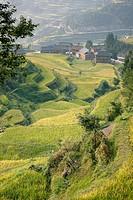 Terraces and rice paddies, Tang an Dong Village, Tang an, Guizhou, China