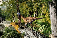Oviraptor philoceratops dinosaur in an ancient forest, artwork. This small dinosaur, an ornithopod, had a characteristic bony head crest. Its fossils ...