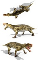 Inostrancevia, artwork. This large mammal_like reptile lived 250 million years ago in present day Russia. It grew up to 4.3 metres in length and had l...