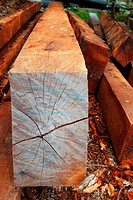 tropical wood trunks from rainforest jungle latin america
