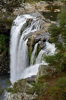 Rainbow Falls on the Kerikeri River in the Bay of Islands, New Zealand. The Maori name for is Waianiwaniwa which means Waters of the Rainbow Kerikeri,...
