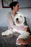 A woman holds her Old English Sheepdog at a Pet Hospital in Condesa, Mexico City, Mexico, February 11, 2011