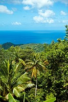 rain forest looking over caribbean sea, st lucia