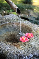 Water basin and camellia flower heads