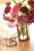 Red Scabiosa Japonica in vase