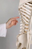 doctor pointing at the spine on a skeleton