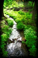A creek in the Finch Arboretum, Spokane, Washington, USA