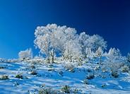 Snowscape of Utsukushigahara Highland, Matsumoto, Nagano, Japan