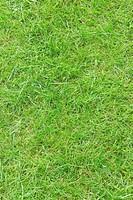 Lawn, Sweden