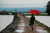 A boy walks with an umbrella during rainy season Teknaf, CoxÆs Bazar, Bangladesh August 2009