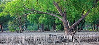 The Sundarbans, a UNESCO World Heritage Site and a wildlife sanctuary The largest littoral mangrove forest in the world, it covers an area of 38,500 s...