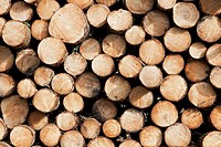 France, Close up_view of firewood stack