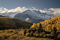 Yellow aspens and snow_covered mountains, Uncompahgre National Forest, Colorado, United States of America, North America