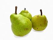 Pear Psylla, pyrus communis, India