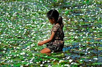 A girl collects water lily or Shapla Dinajpur, Bangladesh October 29, 2006