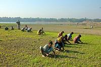 Agriculture Dhaka, Bangladesh November 13, 2007