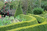 Path leading to garden seat, path edged with trimmed box hedging, in a springtime garden, UK, April