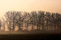 A cold winter morning, a faint sun behind the fog  Parco delle cave, Milan, Italy