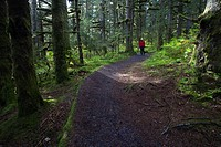 Woman hiking in late afternoon on a trail through Sitka Spruce trees around Lake Gertrude in Fort Abercrombie State Historical Park, Kodiak Island, So...