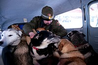 National Park Service Ranger loads his dog team into a plane for transport to base camp in Gates of the Arctic National Park & Preserve, Arctic Alaska...