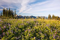 tatoosh mountains in paradise park in mt. rainier national park, washington, united states of america
