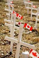 white crosses in a field with canadian flags, calgary, alberta, canada