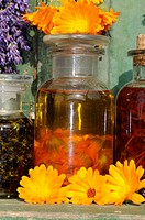 Herb, oil, with, Marigold, Calendula, officinalis,