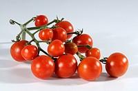 Tomatoes, ´Angora, Super´, Solanum, lycopersicum,