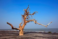 The Sundarbans, aftermath of cyclone Aila, a UNESCO World Heritage Site and a wildlife sanctuary The largest littoral mangrove forest in the world, it...