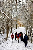 England, Essex, Brentwood. Ramblers walking on a snow covered path in woodland.