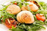 Rocket salad with scallops and tomatos as closeup on a white plate