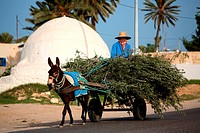 Tunisia, Djerba island, Midoun, olive wood transport