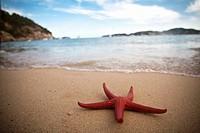 Red starfish on the beach, Ibiza, Spain