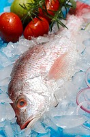 Fresh sea bream on ice, tomatoes, rosemary
