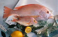 Small and Large Red Snapper on Kitchen Counter