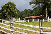 Guatemala, highland farm