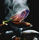 Steaming mussels in white wine