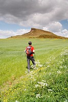 Male hiker approaching Roseberry Topping near Great Ayton, North Yorkshire, England, United Kingdom