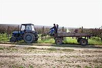 Croatia, Baranja, Men and woman travelling in tractor