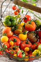Various types of tomatoes in a wire basket