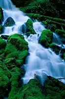Clearwater Falls, Umpqua National Forest, Oregon, USA