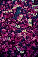Banknotes on leaves