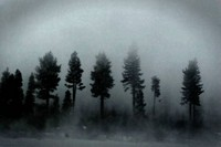 Trees covered with fog
